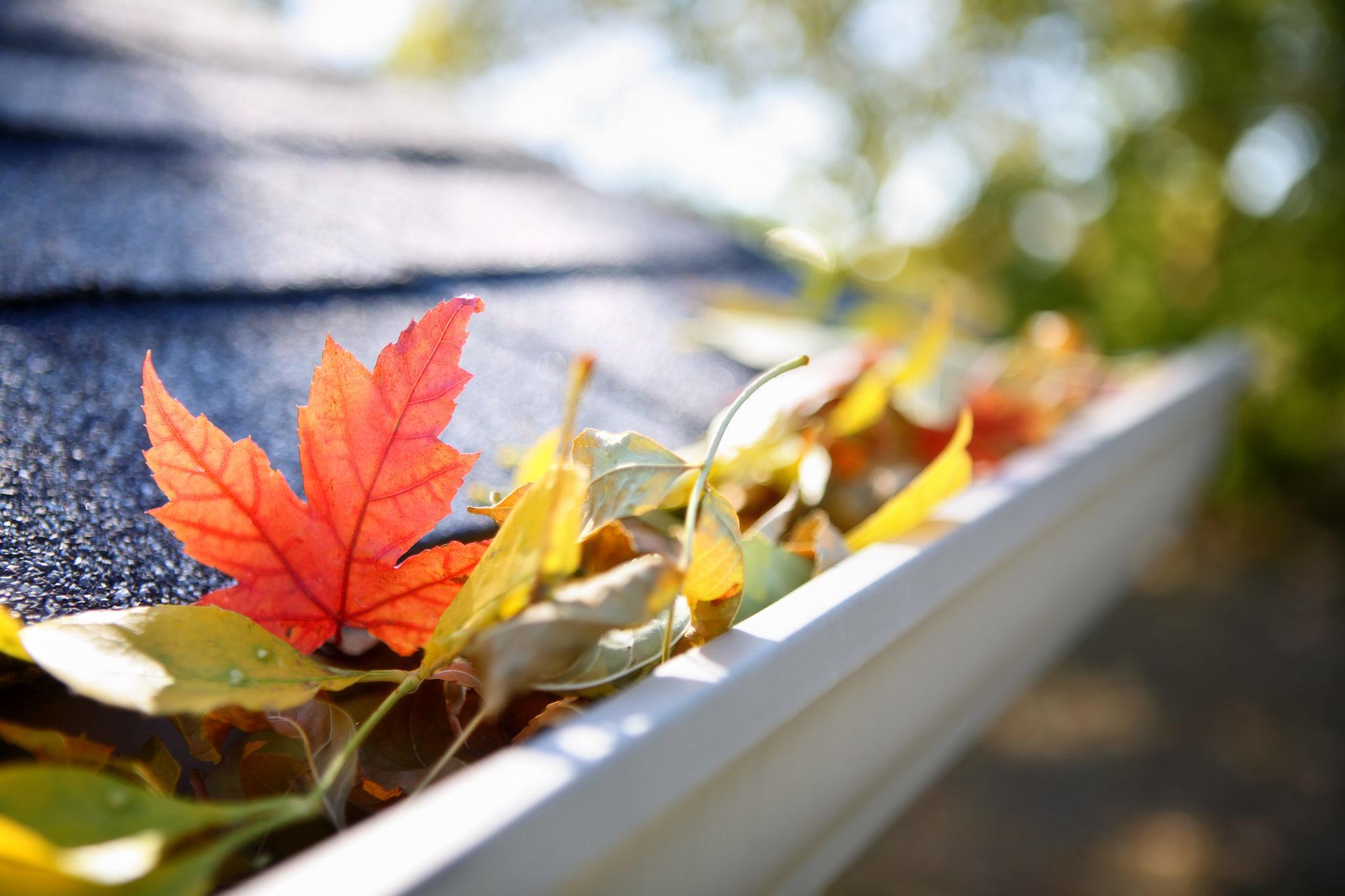 leaves-in-gutter